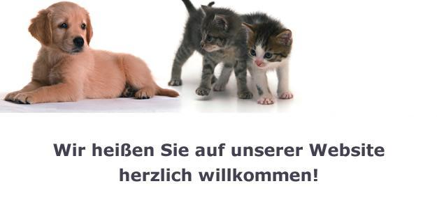 Katzen Hunde Gesundheit